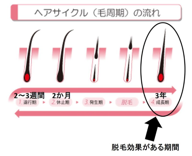 毛のサイクル画像