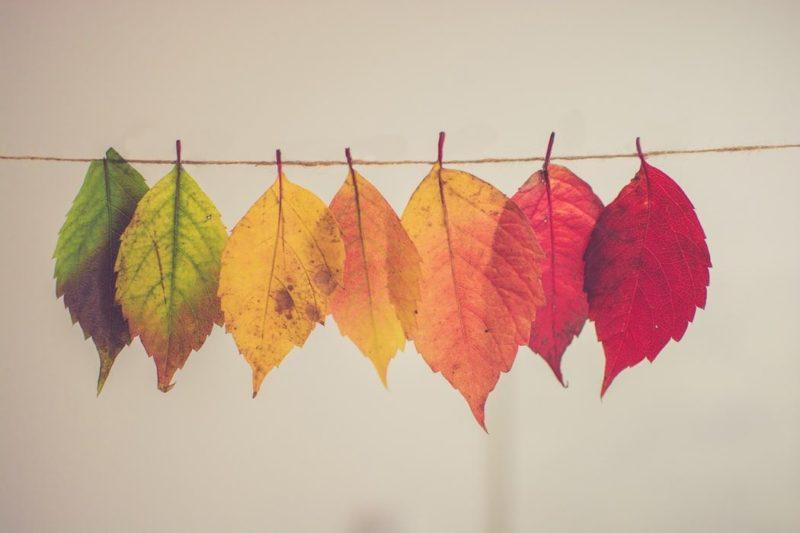 幅広い色の葉の画像