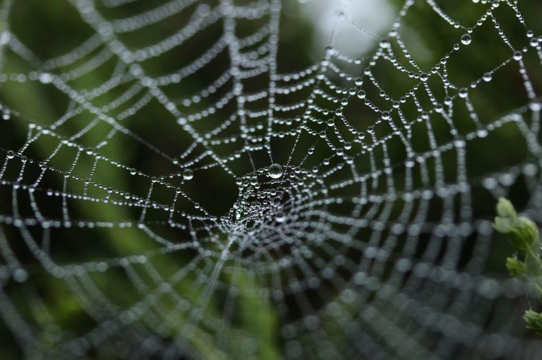 クモの巣の画像